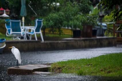 It's shore wet out here (a Florida egret).
