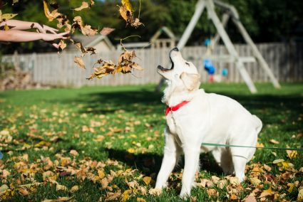 Even Ellie enjoyed the leaves!